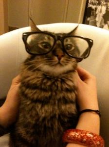 Poetry Cat!